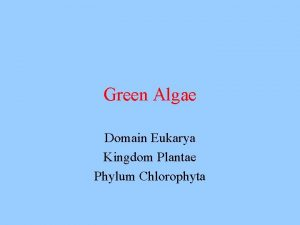 Green Algae Domain Eukarya Kingdom Plantae Phylum Chlorophyta