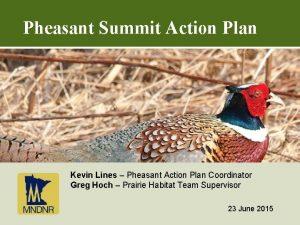 Pheasant Summit Action Plan Kevin Lines Pheasant Action
