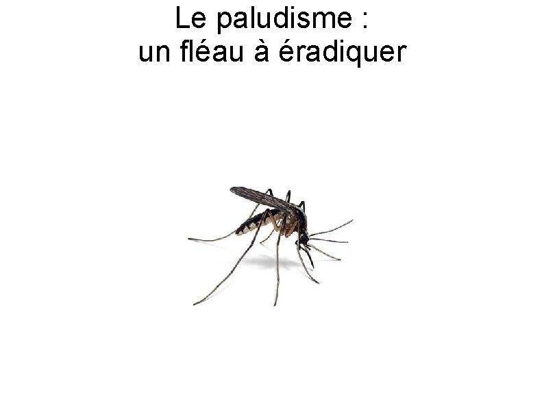 Le paludisme un flau radiquer Le paludisme Dfinition