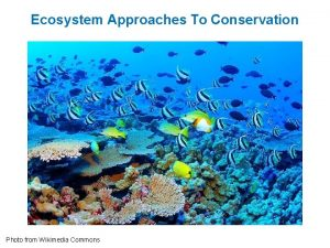 Ecosystem Approaches To Conservation Photo from Wikimedia Commons