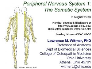 Peripheral Nervous System 1 The Somatic System 2