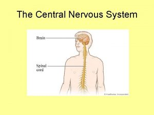 The Central Nervous System Meninges 1 Definition Protective
