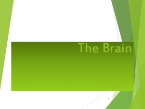 The Brain Module 4 1 The Brain Older
