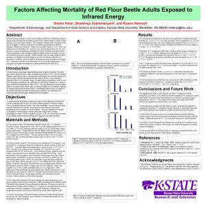 Factors Affecting Mortality of Red Flour Beetle Adults