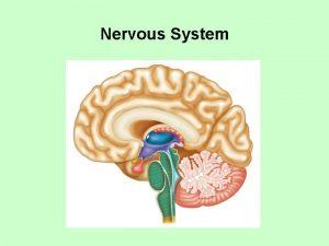 Nervous System Unit 5 Nervous System Sensesp 35