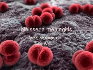 Neisseria meningitis Spinal Meningitis Callie Wall Wha t