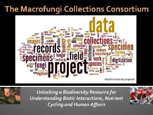 The Macrofungi Collections Consortium Wordle based on proposal