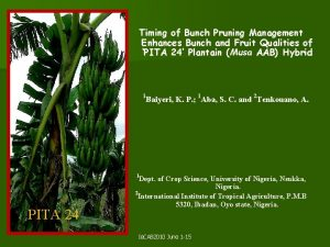 Timing of Bunch Pruning Management Enhances Bunch and