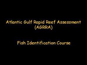Atlantic Gulf Rapid Reef Assessment AGRRA Fish Identification