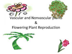 Vascular and Nonvascular plants Flowering Plant Reproduction Vascular