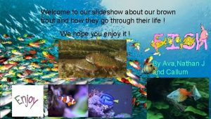 Welcome to our slideshow about our brown trout