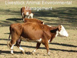 Climate Institute Livestock Animal Environmental Management Climate Institute