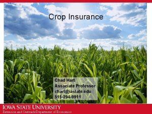 Crop Insurance Chad Hart Associate Professor chartiastate edu