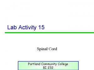 Lab Activity 15 Spinal Cord Portland Community College