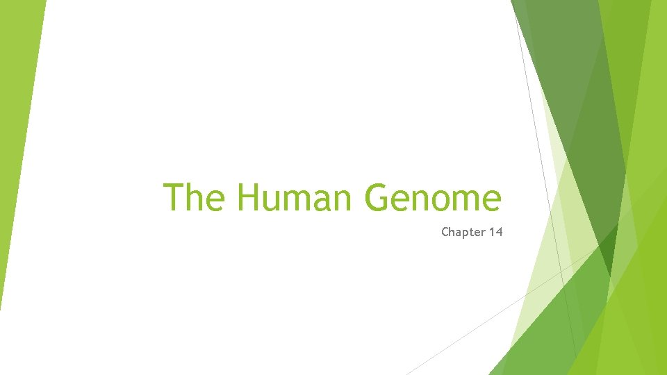 The Human Genome Chapter 14 The Human Genome
