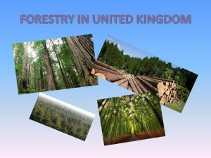 FORESTRY IN UNITED KINGDOM General information about forestry