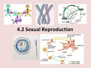 4 2 Sexual Reproduction Agenda Asexual vs Sexual