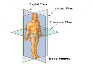 Directional Terms The anatomical position of the body