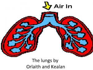 The lungs by Orlaith and Kealan What lungs