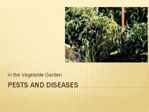 In the Vegetable Garden PESTS AND DISEASES DISEASES