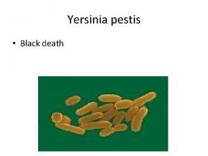 Yersinia pestis Black death taxonomy Member of the