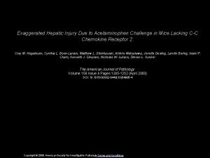 Exaggerated Hepatic Injury Due to Acetaminophen Challenge in