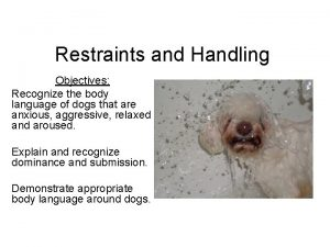 Restraints and Handling Objectives Recognize the body language