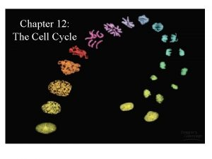 Chapter 12 The Cell Cycle The Cell Cycle