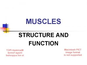 MUSCLES STRUCTURE AND FUNCTION The Muscular System MUSCLES
