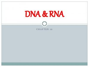 DNA RNA CHAPTER 12 Griffith Transformation Discovered transformation
