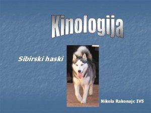 Sibirski haski Nikola Rakonajc IV 5 Poreklo haskija