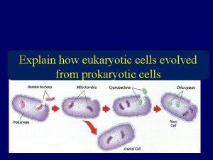 Explain how eukaryotic cells evolved from prokaryotic cells