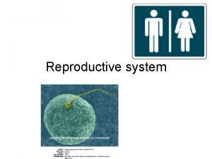 Reproductive system Reproductive Systems Human reproductive system Produces