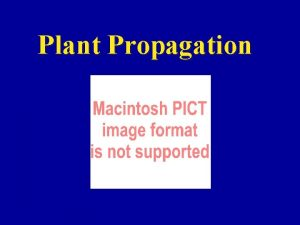 Plant Propagation Containers Plastic is best Easy to