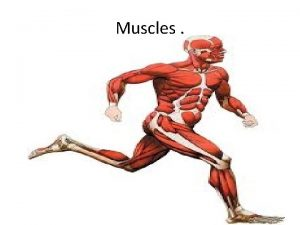 Muscles Did You Know Did you know you