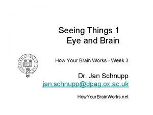 Seeing Things 1 Eye and Brain How Your