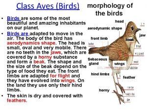 Class Aves Birds morphology of the birds Birds