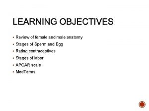 Review of female and male anatomy Stages of