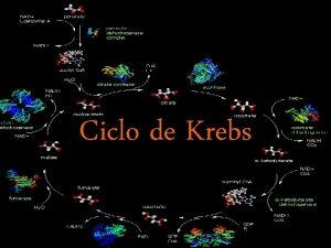 Ciclo de Krebs 1 Introduo O ciclo do