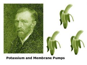 Potassium and Membrane Pumps Potassium and Membrane Pumps