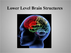 Lower Level Brain Structures Lower Level Brain Structures