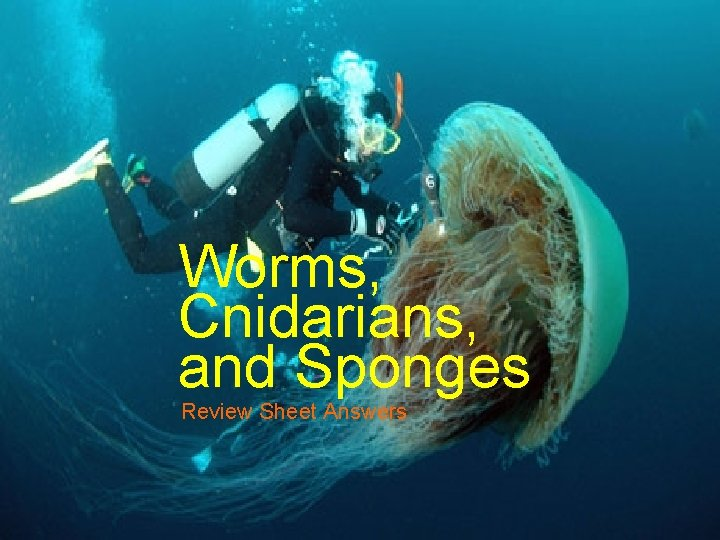 Worms Cnidarians and Sponges Review Sheet Answers Sponges