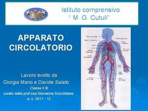 Istituto comprensivo M G Cutuli APPARATO CIRCOLATORIO Lavoro