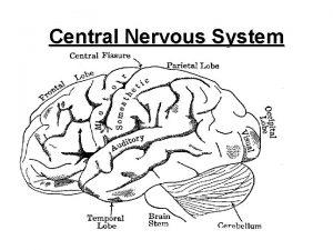 Central Nervous System 1 CNSCentral Nervous System Main