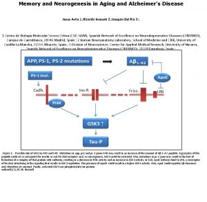 Memory and Neurogenesis in Aging and Alzheimers Disease