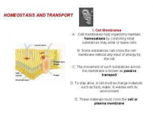 HOMEOSTASIS AND TRANSPORT I Cell Membranes A Cell