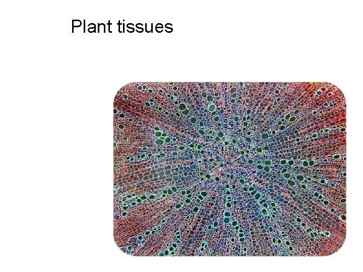 Plant tissues The vascular plant sporophyte is usually