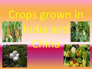 Crops grown in India and China Facts about