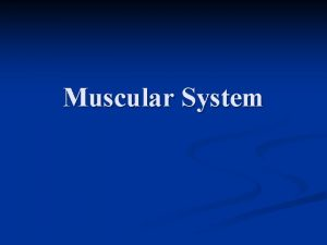 Muscular System 3 types of muscle 1 Skeletal