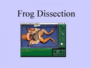 Frog Dissection FROG LATIN meaning ANIMALIA KINGDOM PHYLUM